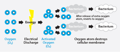 Electrical discharge turns oxygen molecules into activated oxygen (O3). Oxygen atom destroys the cellular membrane of bacteria. After release of extra oxygen atom, it reverts to oxygen.
